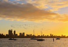 鸟在大群飞行 免版税图库摄影