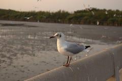 鸟在天堂 免版税库存图片