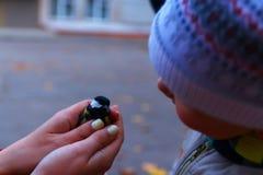 鸟在女性手上 免版税图库摄影