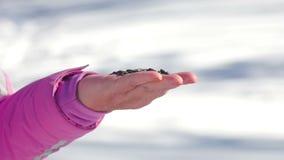 鸟在妇女` s手上吃种子 影视素材