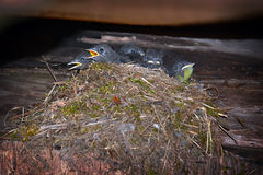 鸟在屋顶下 免版税库存图片