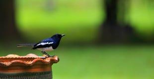 鸟在微小的雨中 免版税库存图片