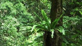 鸟在春溪国立公园筑巢在雨林的蕨 影视素材