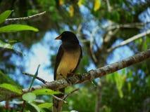 鸟在森林里 免版税库存图片