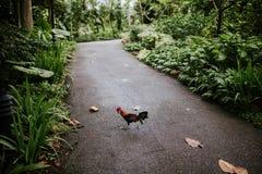 鸟在植物园,新加坡里 库存照片
