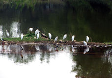 鸟在池塘;自然秀丽 图库摄影
