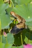 鸟在池塘 免版税图库摄影