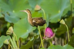 鸟在池塘 库存照片