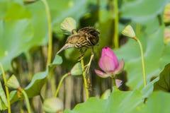 鸟在池塘 免版税库存图片