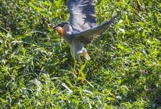鸟在池塘 库存图片