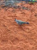 鸟在沙漠 库存照片