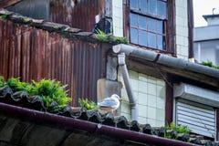 鸟在波尔图 免版税库存图片