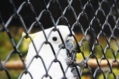 鸟在泰国 免版税库存图片