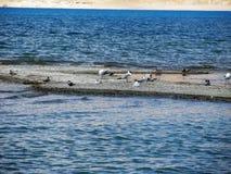 鸟在湖 库存照片