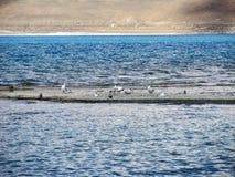 鸟在湖 库存图片