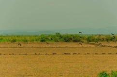 鸟在潘塔纳尔湿地 免版税图库摄影