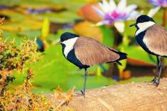 鸟在热带 免版税库存图片