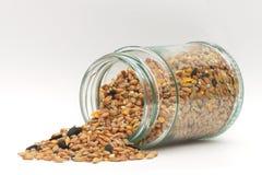 鸟在玻璃jamjar的种子食物 库存图片
