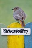 鸟在用词双装饰的篱芭栖息 免版税库存图片