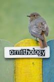 鸟在用词装饰的篱芭栖息或 免版税库存图片