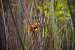 鸟在竹森林里 免版税库存照片