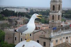 鸟在罗马 免版税库存照片