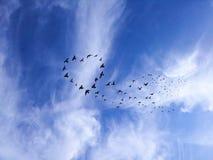 鸟在被绘的蓝色山天空的剪影心脏 免版税库存照片