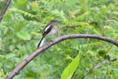 鸟在雨,绿色树中 免版税库存图片