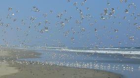 鸟在飞行中在利马南部的一个海滩  免版税库存照片