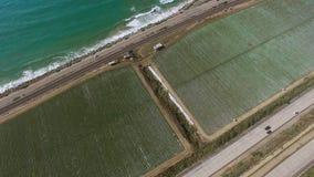 鸟在高速公路和太平洋附近注视种植园领域射击  影视素材