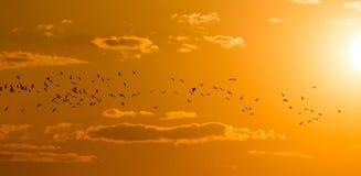 鸟在黎明,太阳群  库存图片