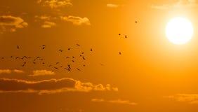 鸟在黎明,太阳群  免版税库存图片