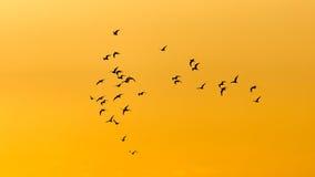 鸟在黎明,太阳群  免版税库存照片