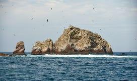 鸟在Ballestas海岛的筑巢区域 免版税库存照片
