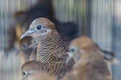 鸟在Pasar Ngasem市场上在日惹,中爪哇省,  库存照片