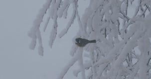 鸟坐一个树枝在冬天 影视素材