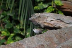 鸟坐分支在斯图加特在德国 库存图片