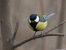 鸟坐分支 免版税库存照片