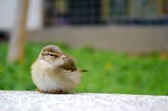 鸟坐微小 免版税库存照片