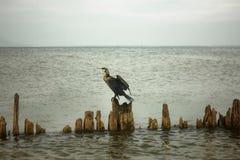 鸟坐日志 库存照片