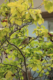 鸟坐树分支在夏天 免版税图库摄影
