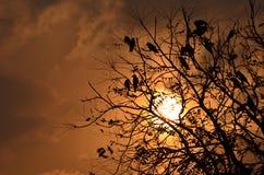 鸟坐树在与日落和相当五颜六色的天空的长的天以后在背景 免版税图库摄影