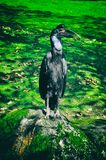 鸟坐树枝在热带森林或密林里 免版税库存照片