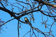 鸟坐树的分支 库存图片