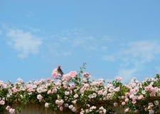 鸟坐美丽的开花的玫瑰色花 免版税图库摄影