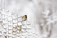 鸟坐链子链接篱芭在冬天 免版税库存照片