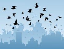 鸟城市 图库摄影