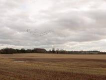 鸟多云喜怒无常的阴暗天气迁移天空群  图库摄影