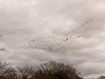 鸟多云喜怒无常的阴暗天气迁移天空群  库存照片