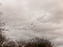 鸟多云喜怒无常的阴暗天气迁移天空群  免版税库存图片